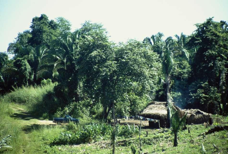 San Pedro Columbia   Maya-Hütte bei Lubaantun   © Karibik Inside
