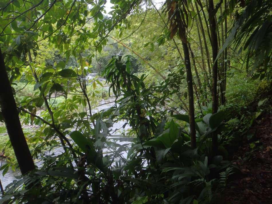 Dominica | Unterwegs auf dem WNT - Segment5 | © Tamarind Tree Hotel