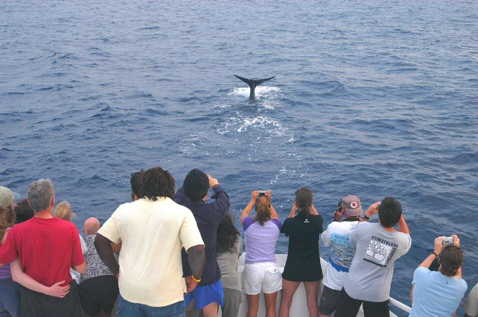 Dominica | Whalewatching | © Dominica Tourist Board