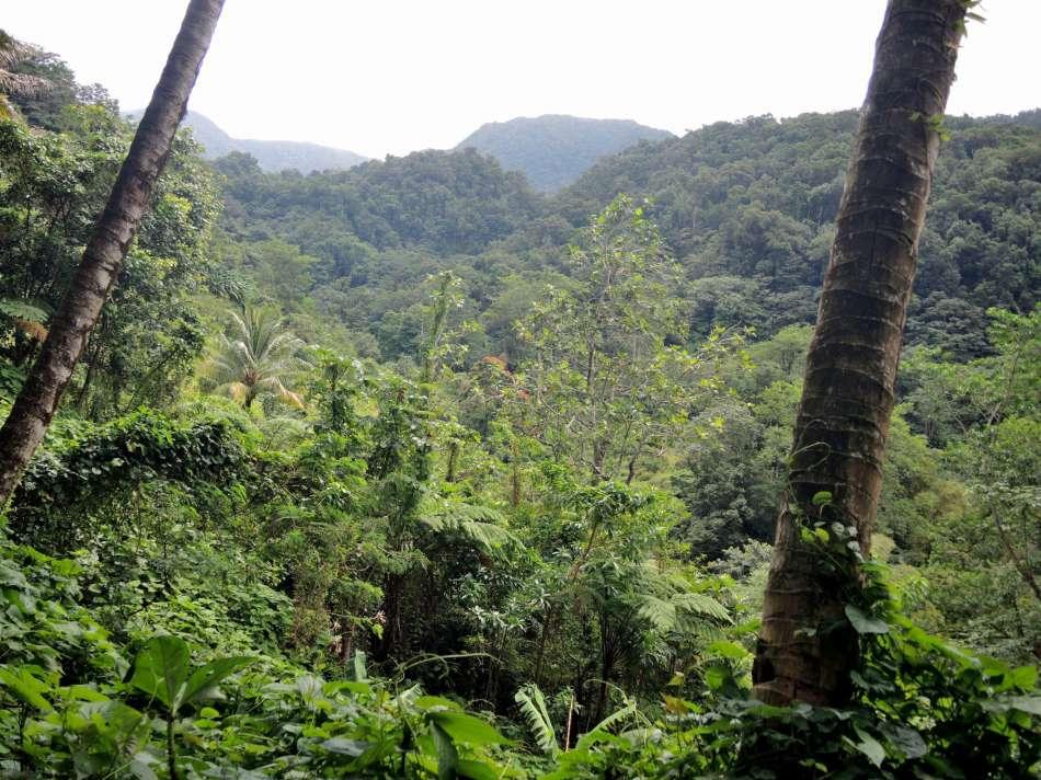 Dominica | Auf dem Syndicate - Picard Pfad | © Günter Klos