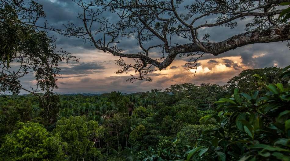 Anakonda Amazon Cruises | Dschungel am Rio Napo | © Advantage Travel Ecuador