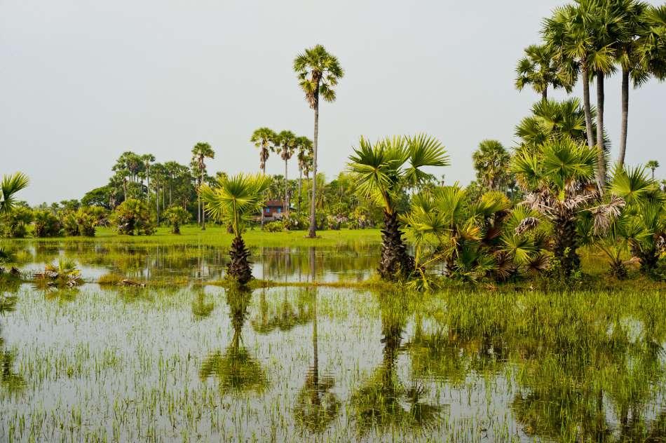 Aqua Expeditions   Reisfeld am Mekong in Vietnam   © Aqua Expeditions