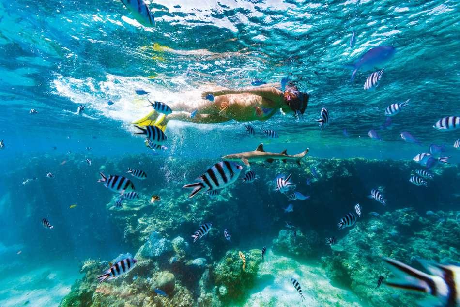 "MV ""Fiji Princess"" | Auf Schnorcheltour | © Blue Lagoon Cruises"