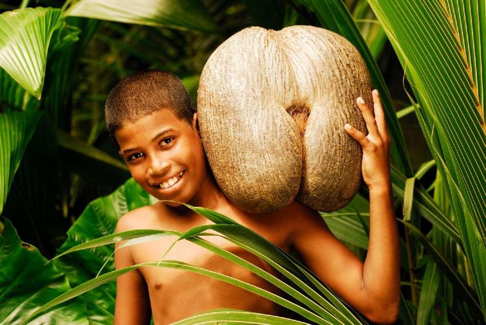 Seychellen | Die Coco de Mer - der größte Planzensamen der Welt | © Mason's Travel / Raymond Sahuquet