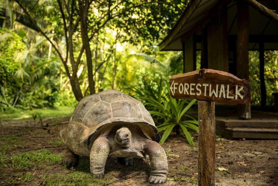 Seychellen | Seychellen-Riesenschildkröte | © Mason's Travel