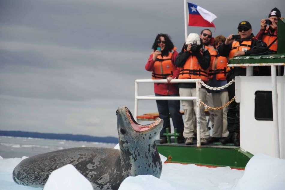Chile | Seeleopard | © Tourismo Skorpios